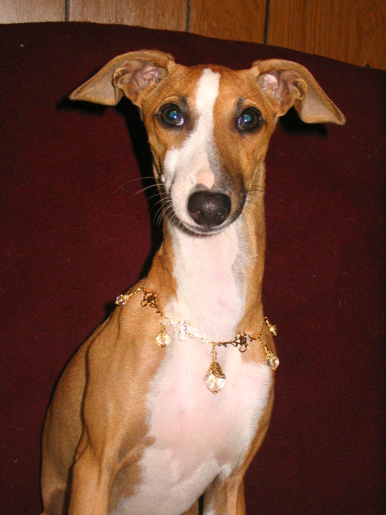 Contact US >> Sable Greyhound Gifts: Dog Collars